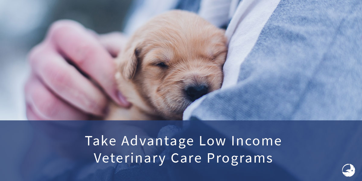 The Ultimate Guide To Free and Low Cost Veterinary Care